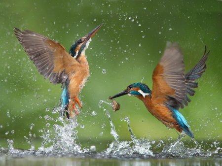 Как фотографировать птиц?